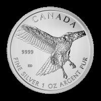 1 oz Silbermünzen Greifvögel-Serie I Rotschwanzbussard 2015