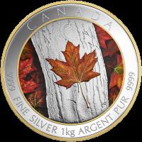 1 kg farbige Silbermünze Ahornblatt für immer 2016